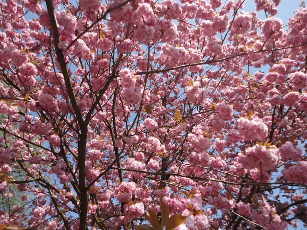 DSC03385 Frühling Blühen verkleinert